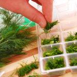 заготовка зелени на зиму