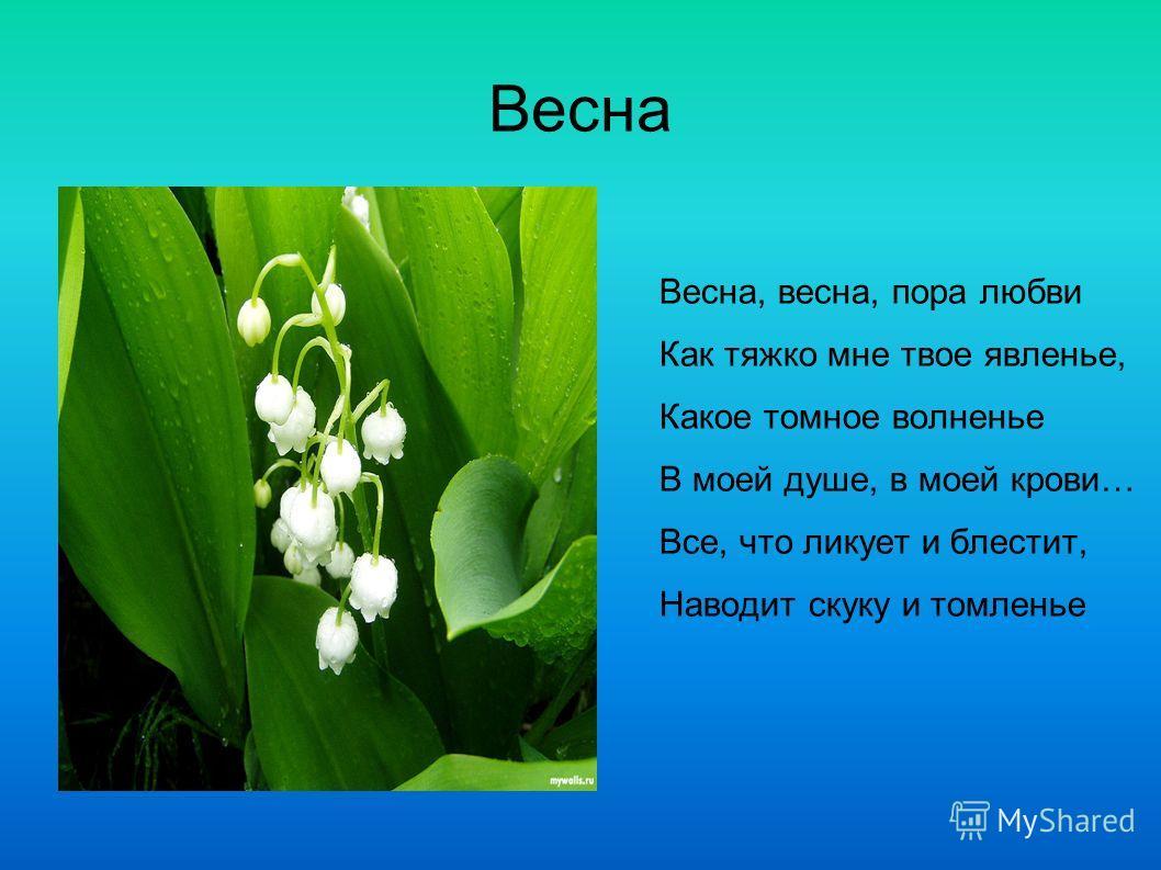Цветы для сада на урале